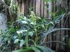 walingwaling-july-28-2009